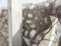 metal seahorse decor